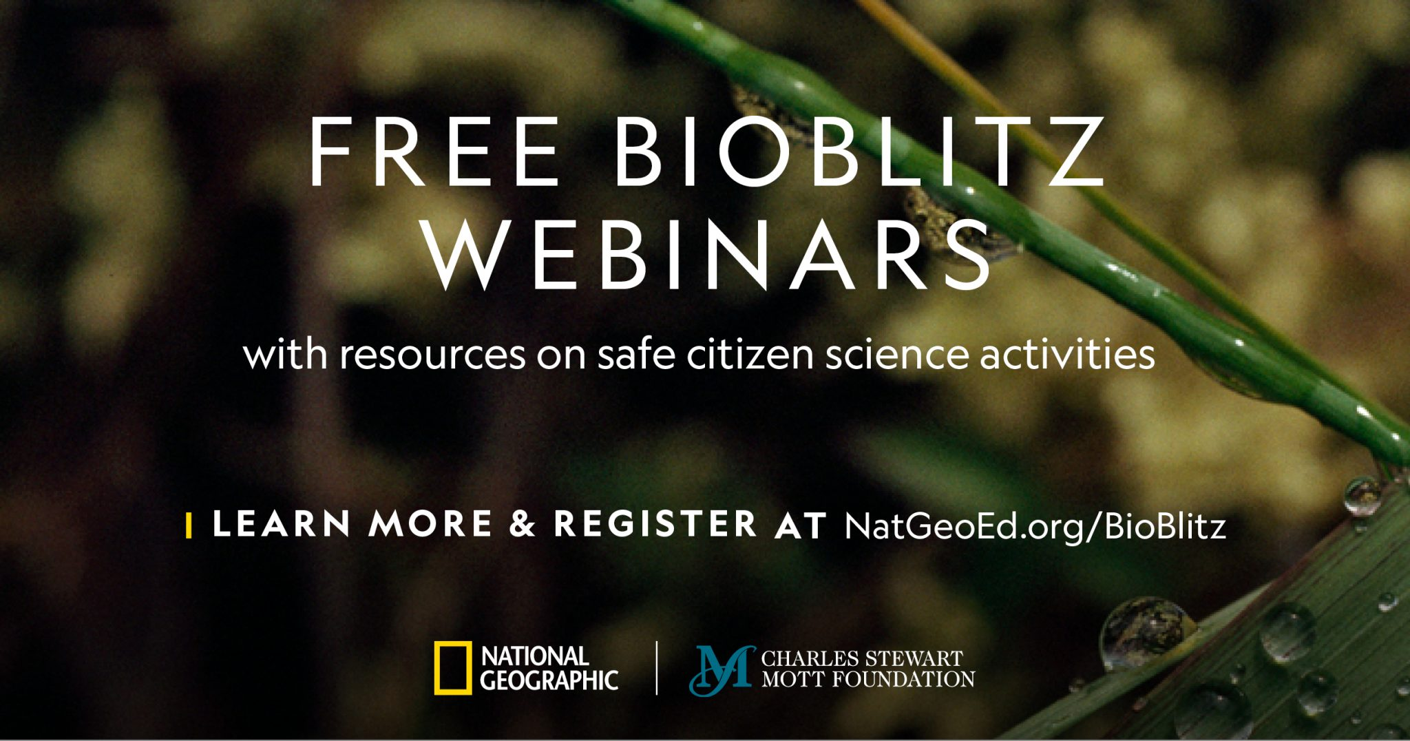 Free BioBlitz Webinars